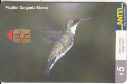 URUGUAY - Bird, Picaflor Garganta Blanca(123a), 06/00, Used - Birds