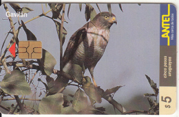 URUGUAY - Bird, Gavilan(111a), 03/00, Used - Birds