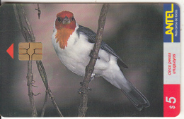 URUGUAY - Bird, Cardenal(80a), 09/99, Used - Birds