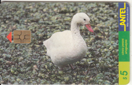 URUGUAY - Bird, Coscoroba(72a), 09/99, Used - Birds