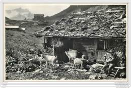 Suisse - Un Chalet Suisse Avec Des Chevres Et Un Berger - Photo Perochet A Lausanne 168 - VD Waadt