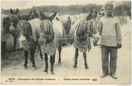 Militaria - India Army - Convoyeur Indien - War 1914 - Guerre 1914-18