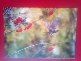 Birds - Belarus