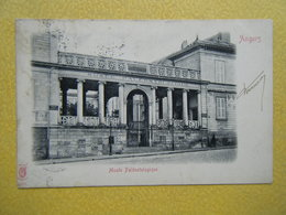 ANGERS. Le Musée Paléontologique. - Angers