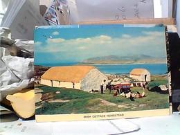 EIRE IRELAND IRISH COTTAGE HOMESTEAD  VB1977 GS1369 - Irlanda