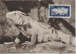 Carte Maximum 1965 Zoo De Berlin Iguane 798 - DDR