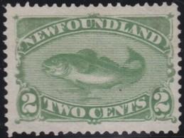 Newfoundland      .   Yvert   36     .       (*)      .  Geen Gom   .     /    .     No Gum - Newfoundland