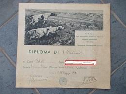 9024-DIPLOMA DI 1° PREMIO CANE RAZZA SPINONE ITALIANO-TORINO 1952 - Diplomi E Pagelle