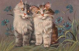CHAT Illustrateur BOULANGER  Langage Des Fleurs BLEUET - Katten