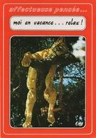 """CPSM FANTAISIE ANIMAL  Lionne Dans Un Arbre """"Affectueuses Pensées"""" Moi En Vacance...relax! - Lions"""