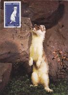 Carte-Maximum ANDORRE N° Yvert 260 (HERMINE) Obl Ord Pas De La Casa 1977 - Cartas