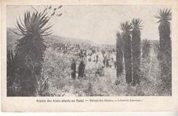 Région Des Aloés Géants Au NATAL - Natal