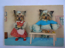 Honden Chien En Aangekleed Terrier Vetu Edit Kruger 900/157 - Dressed Animals