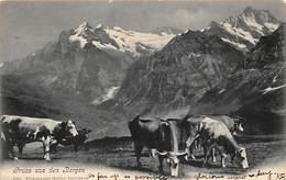 CPA - Gruss Aus Den Bergen - Belles Vaches - Greetings From...