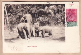 As0124 Ceylon Famille ELEPHANTS Dresseur 1903 Lieutenant De LANGLOIS 6e Cuirassiers Sainte Menehould -Sri-Lanka - Sri Lanka (Ceylon)