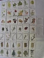 JARDI' Jeu Cartes 7 Familles Gamm Vert Arbre Insecte Fleur Coccinelle Scarabee Fruit Fraise Pomme Noix - Autres Collections