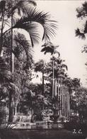 ILE DE LA REUNION,SAINT DENIS ,jardin De L'état,grand Pot De Fleurs,avec Timbre Surcharge Cotée,12f CFA,CARTE PHOTO - Saint Denis