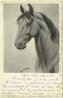Illustrateur : E.V.M. Cheval. - Illustratoren & Fotografen