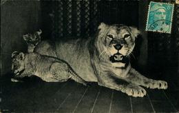 N°813  RRR GG PARC  ZOOLOGIQUE DU BOIS DE VINCENNES LIONNE ET SES PETITS - Lions