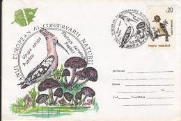 D6655- MUSHROOMS, HOOPOE, BIRDS, SPECIAL COVER, 1995, ROMANIA - Climbing Birds