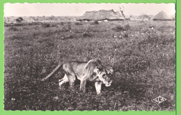 FAUNE AFRICAINE / CAMEROUN / LIONNE .....Carte Vierge - Lions