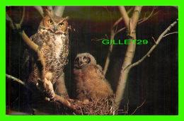 OISEAUX - GREAT HORNED OWL - MALE GUARDING YOUNG OWL ON NEST -  DAN GIBSON - - Oiseaux