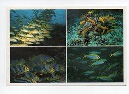Maldives: Poisson Bluestripe Snapper, Yellow Goatfish, Oriental Sweetlips, Yellowfin Fusilier (18-1761) - Maldives