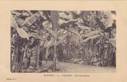 AFRIQUE,AFRICA,Dahomey En 1916, Devenu Bénin En 1975,empire Colonial Français,colonie,ADJARAH, Bananeraie,bananier,rare - Benin