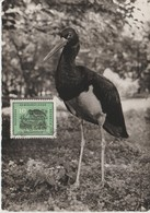 Carte Maximum Oiseaux 1959 Cigogne 414 - [6] Democratic Republic