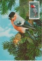 Carte Maximum Oiseaux 1967 Bouvreuils 972 - Cartes-Maximum (CM)