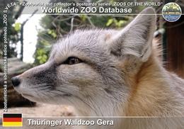 020 Thuringer Waldzoo Gera, DE - Corsac Fox (Vulpes Corsac) - Gera