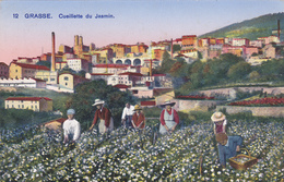 CARTE POSTALE ANCIENNE,GRASSE,prés De Cannes,apres Guerre,METIER,PAYSANNE,CH AMPS DE JASMIN,CUEILLETTE,POUR PARFUM - Grasse