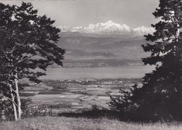 SUISSE,SWITZERLAND,SWISS, HELVETIA,SCHWEIZ,lac Leman,Barillette,terrain Non Constructible - Suisse