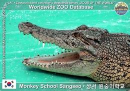 050 Monkey School Sangseo, KR - Estuarine Crocodile (Crocodylus Porosus) - Korea, South