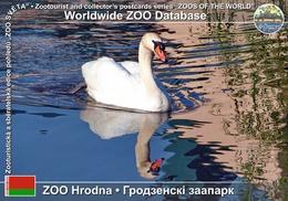 051 ZOO Hrodna, BY - Mute Swan (Cygnus Olor) - Belarus