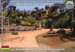 093 La Vanille Reserve Des Mascareignes, MU - Giant Tortoise (Aldabrachelys Gigantea) - Mauritius