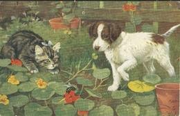 Chat Et Chien Abeille Tuck 9538 - Tuck, Raphael