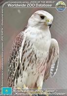 "253 Nursery Of Birds Of Prey ""Sunqar"", KZ - Turkestan Saker (Falco Cherrug Coatsi) - Kazakhstan"