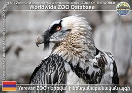 255 Yerevan ZOO, AM - Bearded Vulture (Gypaetus Barbatus) - Armenia