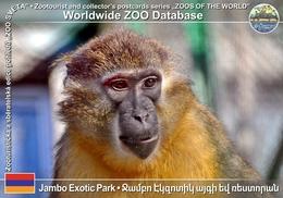 256 Jambo Exotic Park, AM - Golden-bellied Mangabey (Cercocebus Chrysogaster) - Armenia