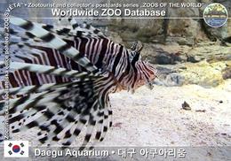 324 Daegu Aquarium, KR - Lionfish (Pterois Volitans) - Korea, South