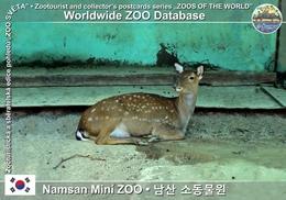 325 Namsan Mini ZOO († 2006), KR - Formosan Sika Deer (Cervus Nippon Taiouanus) - Korea, South