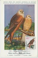 Carte Maximum Oiseaux 1973 Milan 606 - Cartes-Maximum (CM)