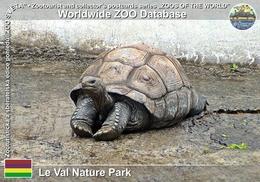 377 Le Val Nature Park, MU - Giant Tortoise (Aldabrachelys Gigantea) - Mauritius