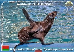 "409 Dolphinarium ""Nemo"" Minsk, BY - South American Sea Lion (Otaria Flavescens) - Belarus"