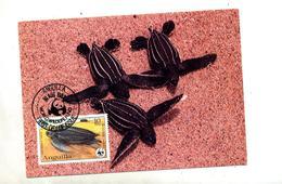 Carte Maximum 1983 Tortue - Anguilla (1968-...)