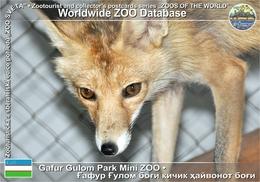 459 Gafur Gulom Park Mini ZOO, UZ - Turkestan Fox (Vulpes Vulpes Ochroxantha) - Ouzbékistan