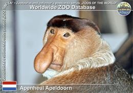 535 Apenheul Apeldoorn, NL - Proboscis Monkey (Nasalis Larvatus) - Apeldoorn