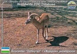 "551 Ecocentre ""Dzheyran"", UZ - Bukhara Urial (Ovis Orientalis Bochariensis) - Uzbekistan"