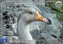 590 Mini ZOO Te Ariu, XK - Domestic Goose × Chinese Goose (Anser Anser F. Domesticus × Anser Cygnoides F. Domestica) - Kosovo